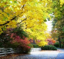 Fall Lane - Photo by Meredith Eastwood