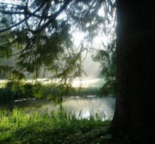 Mosswood Hollow - Photo by Meredith Eastwood