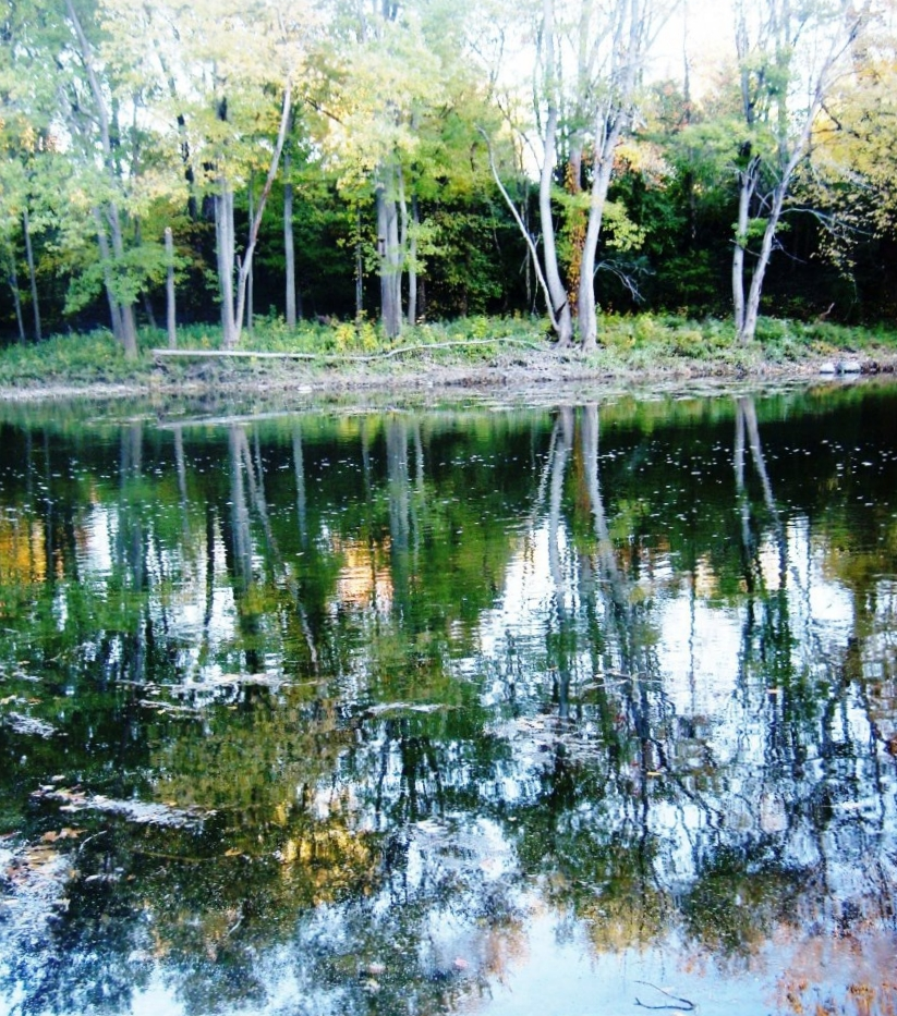 Trees Reflected - Photo by Meredith Eastwood