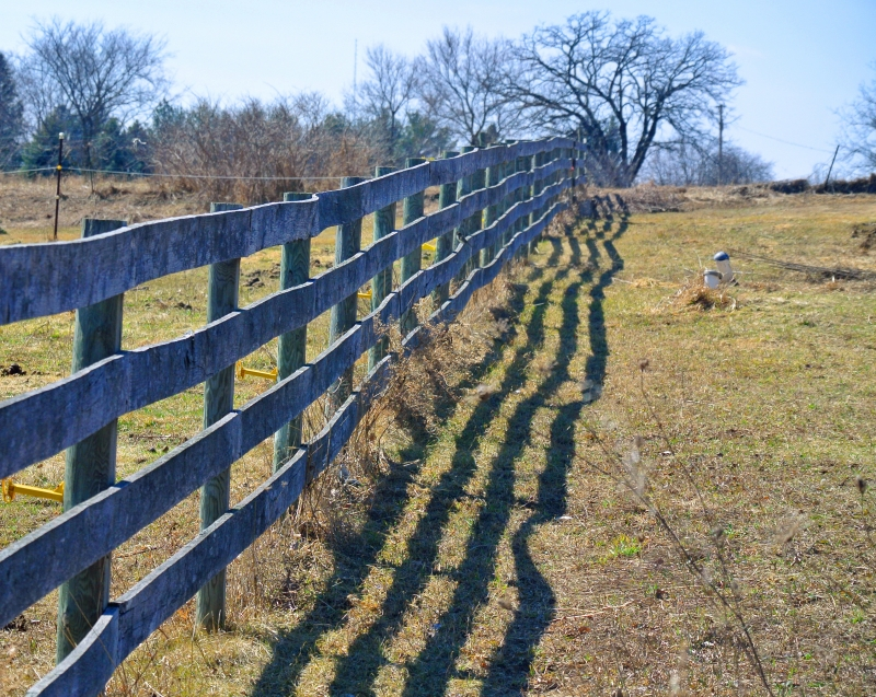 Fence and Shadow - Photo by Meredith Eastwood