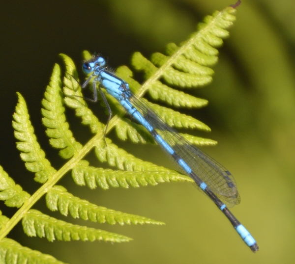 Dragonfly Resting - Photo by Meredith Eastwood