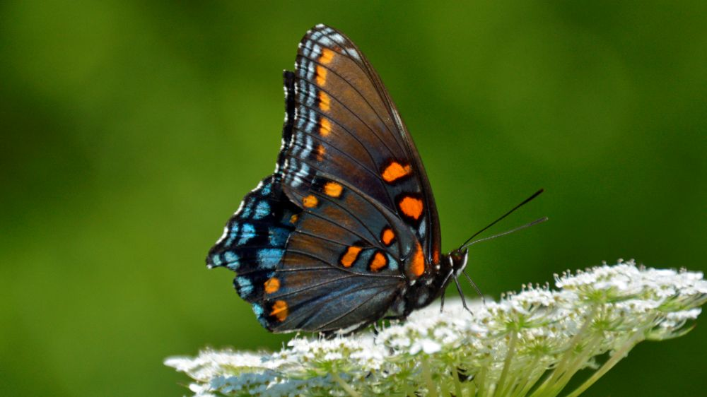 The Butterfly on the Path - Photo by Meredith Eastwood