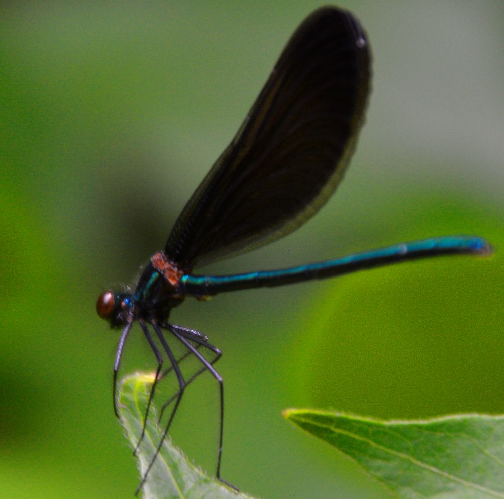 Dream of the Dragonfly - Photo by Meredith Eastwood