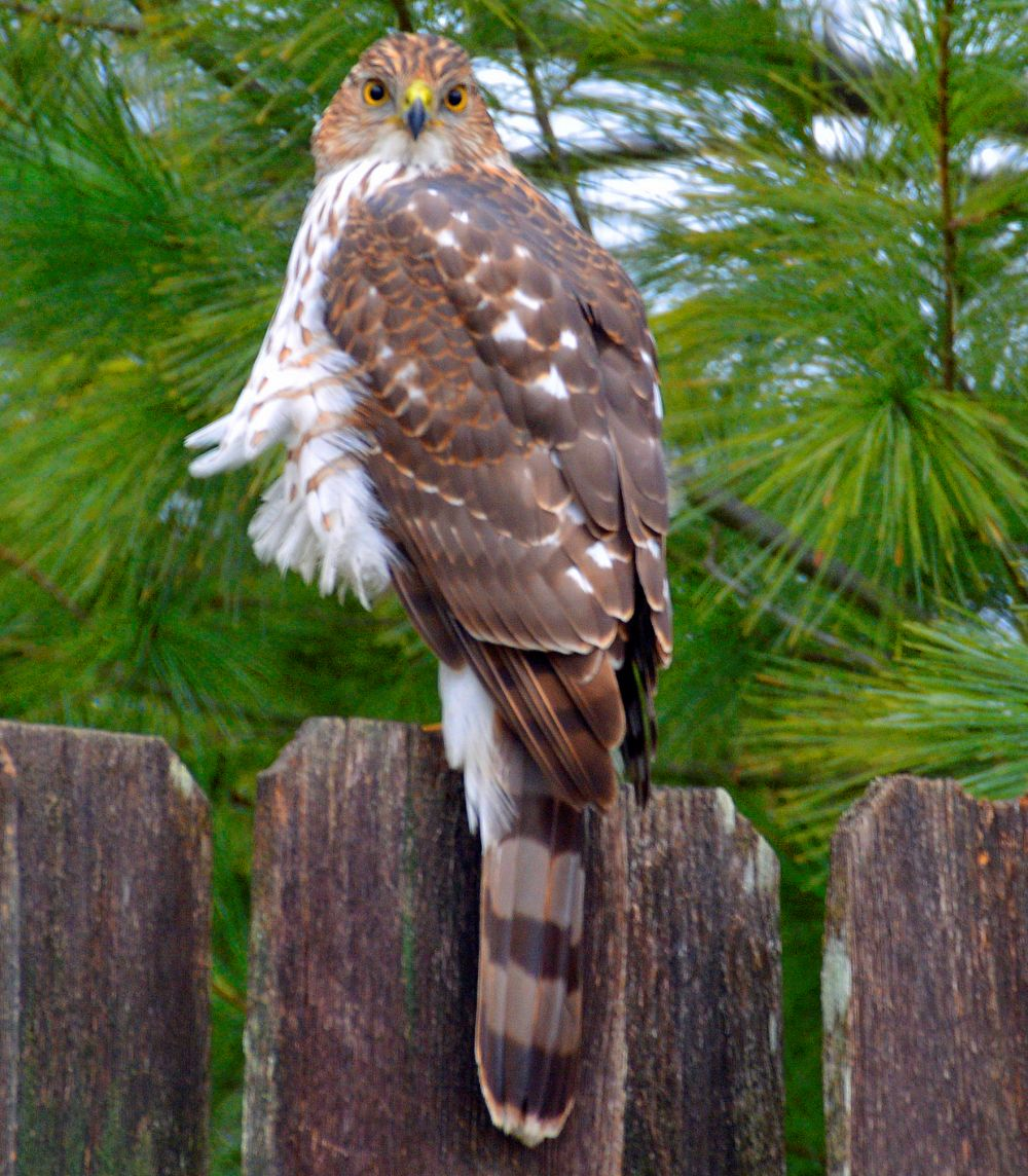 The Raptor - Photo by Meredith Eastwood