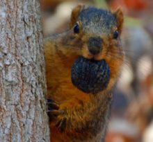 What a Nut! - Photo by Meredith Eastwood