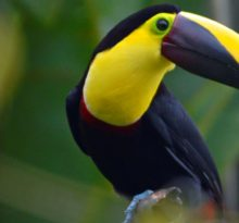 Tucan - Photo by Meredith Eastwood