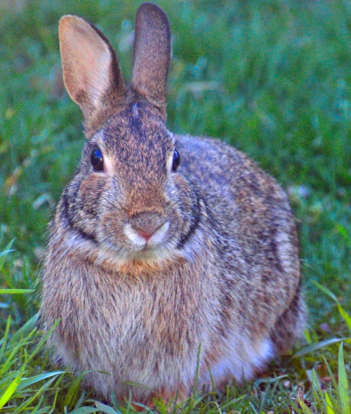The Hare - photo by Meredith Eastwood