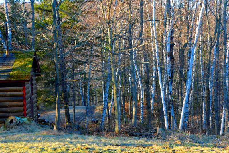 """""""Among the Birches"""" - Photo by Meredith Eastwood"""