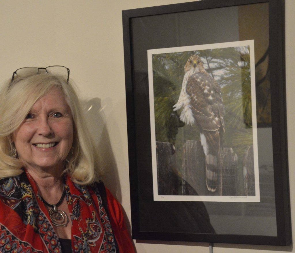 Meredith Eastwood and her hawk photo