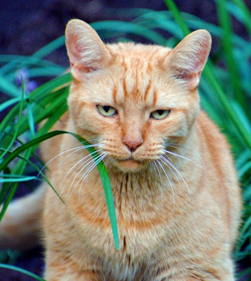 Buffett the Cat - Photo by Meredith Eastwood
