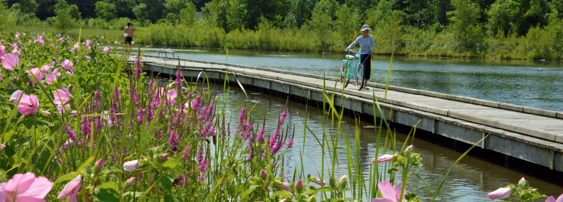 A woman walking her bike on a boardwalk that traverses a marshy area