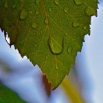 Closeup of water drops on a leaf, photo by Meredith Eastwood