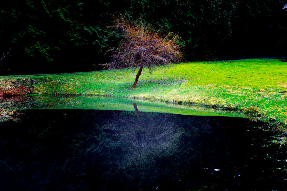 A small tree reflected in dark water