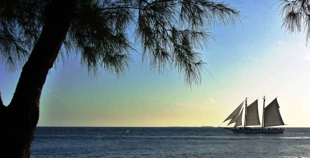 A sailboat with three different sails on the ocean, a palm tree in the foreground